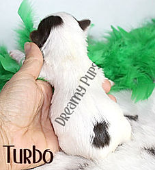 turboIMG_0851.jpg