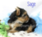 sageMG_7594.jpg