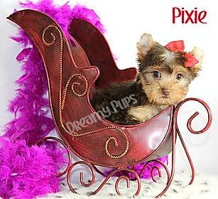 pixieIMG_1065.jpg