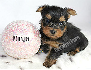 ninjaIMG_1084.jpg