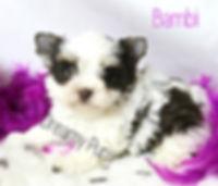 bambiIMG_7534 - Copy.jpg