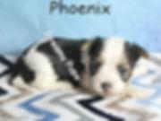 phoenixIMG_8958.jpg