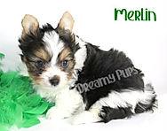 merlinIMG_0765.jpg