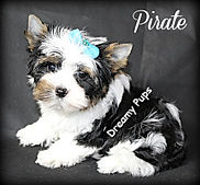 pirateIMG_6100.jpg