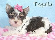 tequilaIMG_2235.jpg