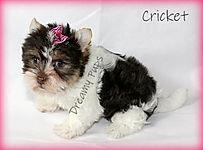 cricketIMG_0522.jpg