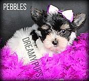pebblesIMG_9480.jpg