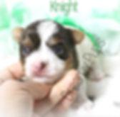 knightIMG_7493.jpg