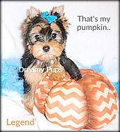 legend 059legend.jpg