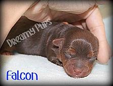 falconIMG_9969.jpg