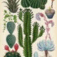 botanischtekenen5.jpeg