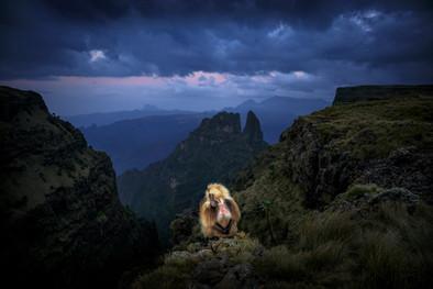 Gelada-12,-Simien-Mountains-National-Par