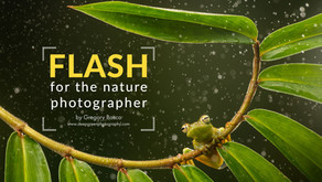 Using Flash for Nature Photography