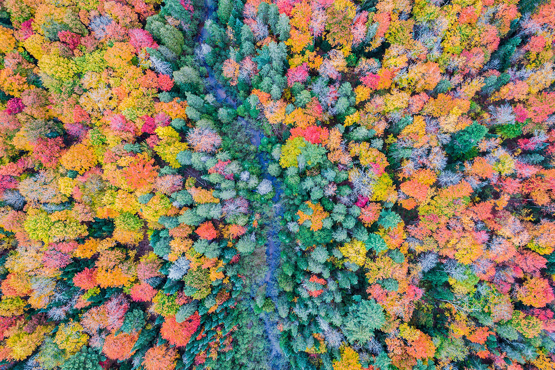 Autumn-Explosion.jpg