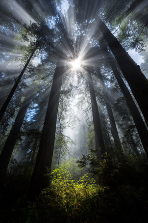 Sunbeams-in-the-forest-5,-Redwood-National-Park,-California.jpg