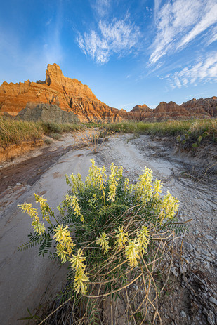 Sunrise-flowers,-Badlands-National-Park,