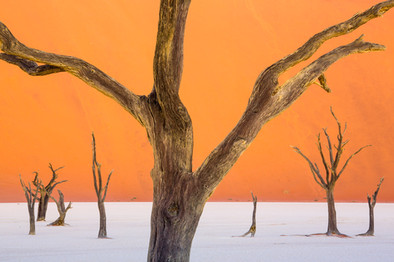 Deadvlei-at-twilight,-Namib-Naukluft-Nat