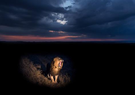 Male-lion-at-twilight-1,-Masai-Mara-Nati