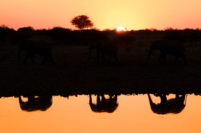 Elephant-reflections-in-silhouette-again