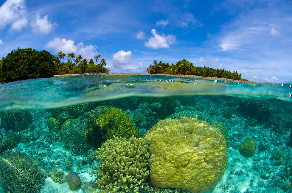 shutterstock_Coral reef overunder at the Marshall Islands.jpg
