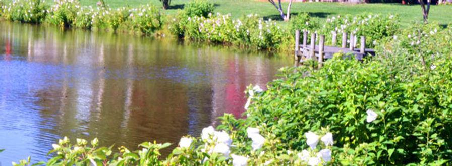 summer at Lake Comegys 7.31.jpeg