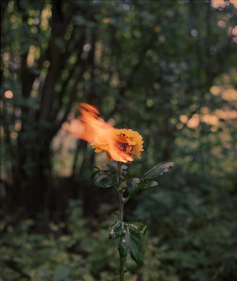 Fireflower, 2020