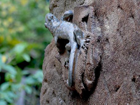 Una nueva especie en el jardín...