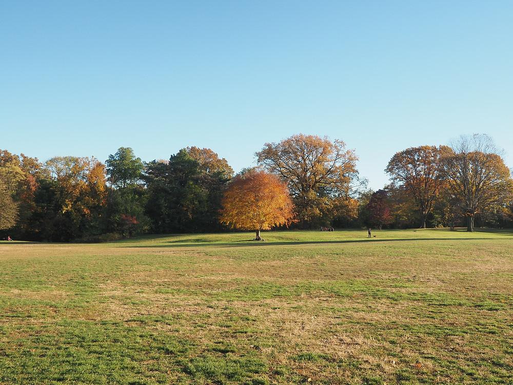 Long Meadow, Prospect Park, Brooklyn