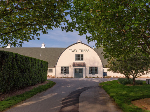 Discover Equine Elegance at Two Trees in the Hamptons