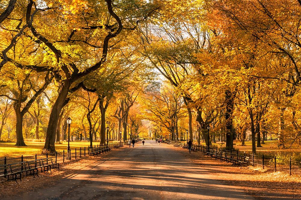 Autumn - Fall - New York - Central Park