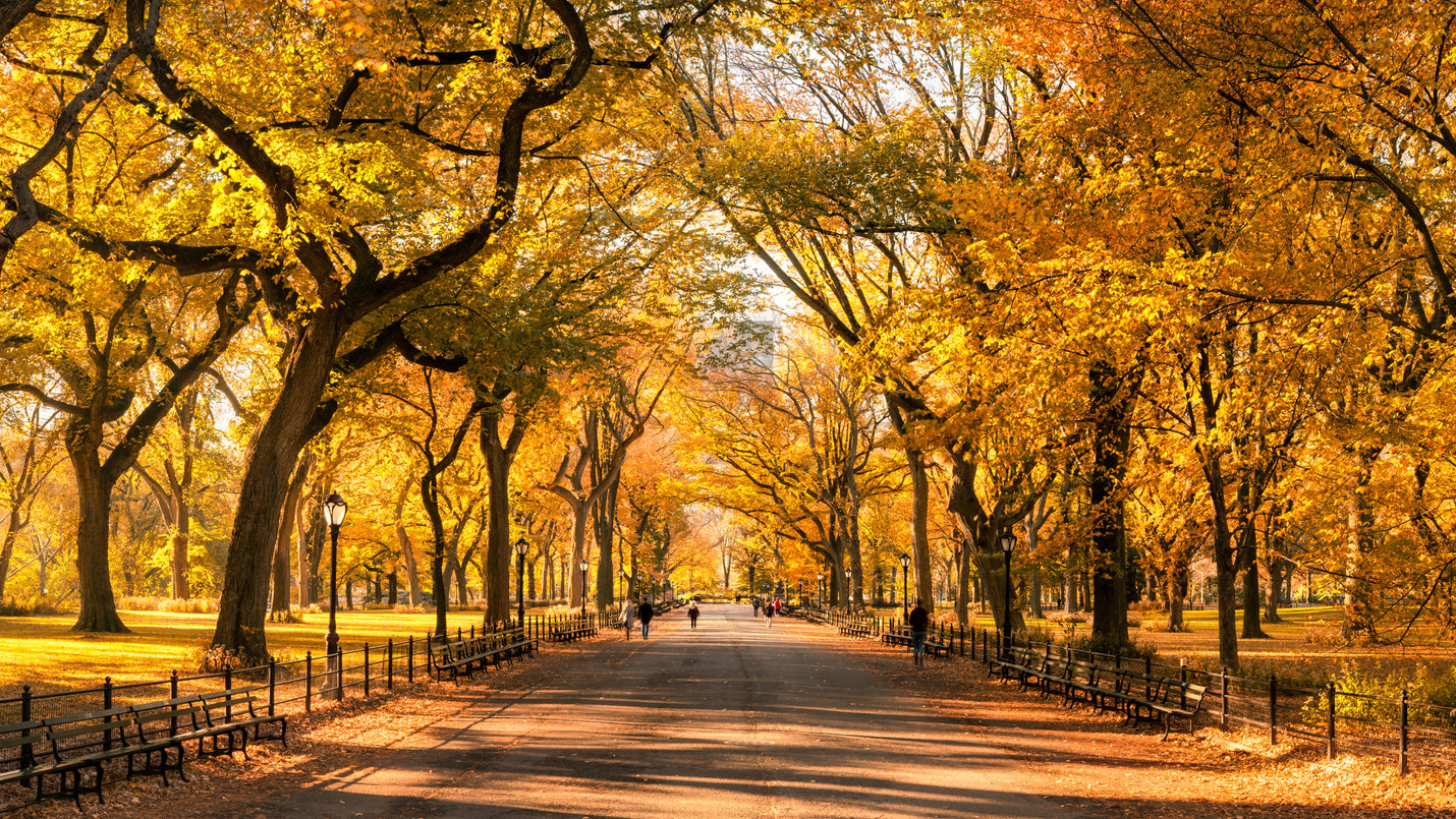 Fall in Love with Fall in New York City