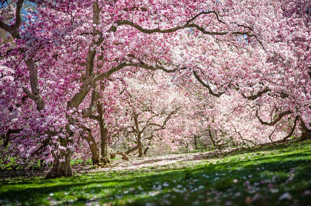 New York Botanical Garden trees