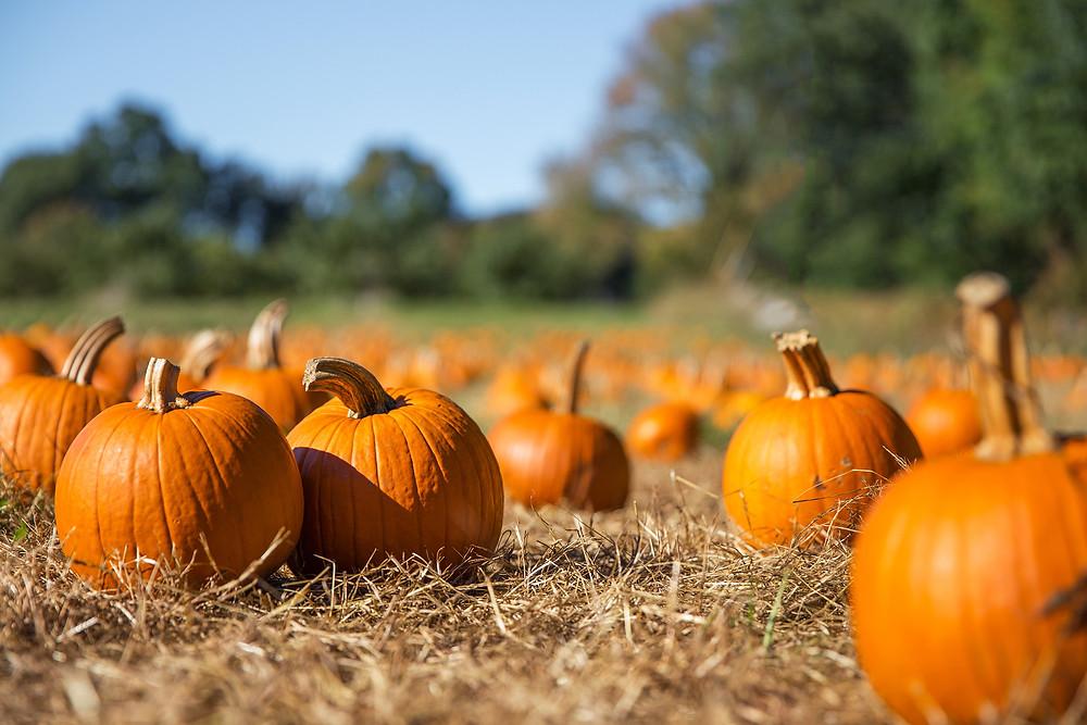 Mattituck's Annual Pumpkin Festival
