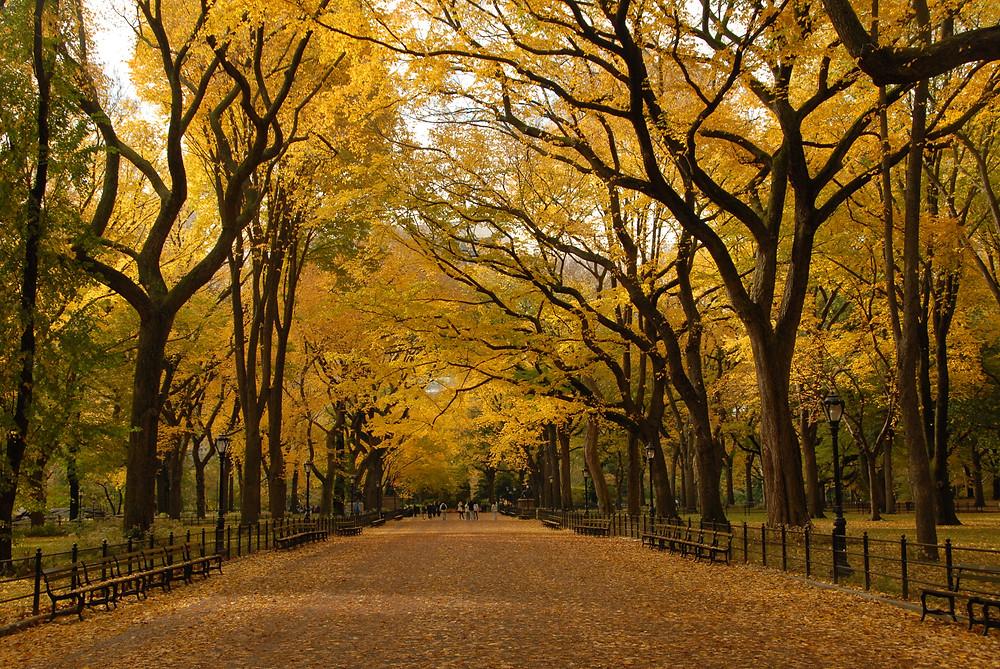 The Mall, Central Park, New York, USA