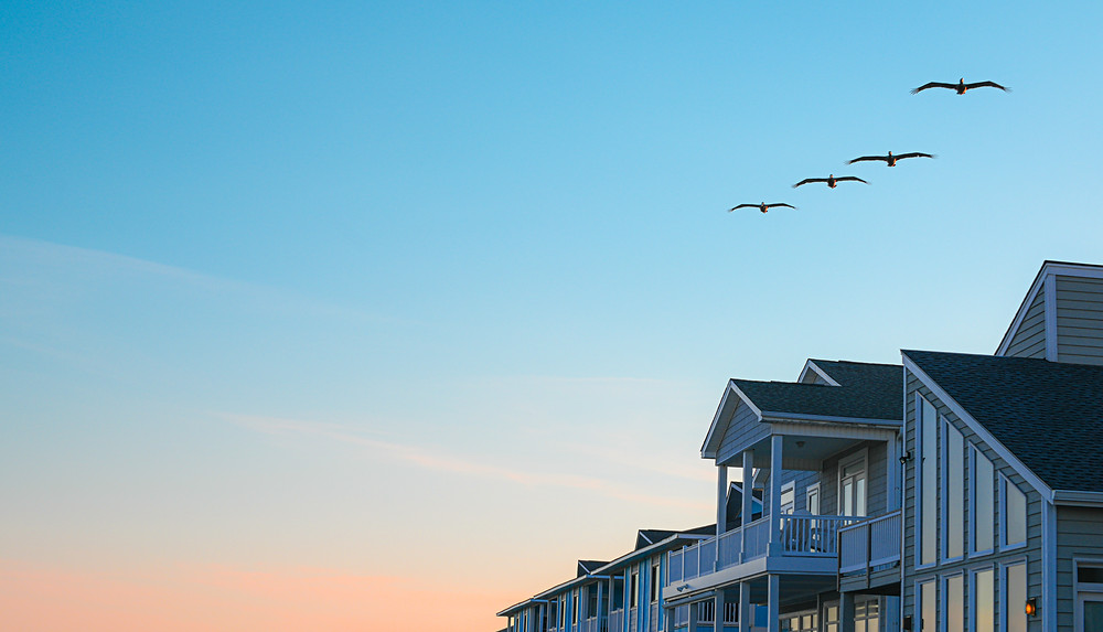 Celebrate World Shorebirds Day in Southampton Sept. 7