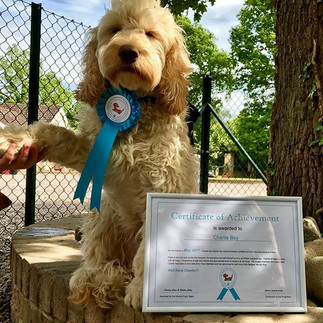 Dog of the Month for May 2017!