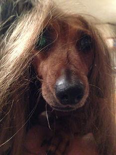 Maisys new hair do.jpg