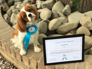 Dog of the Month June 2017!