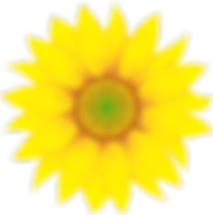 singlesunflower