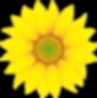 singlesunflower