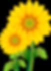 kissclipart-sunflower-clipart-common-sun