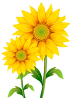 kissclipart-sunflower-clipart-common-sun