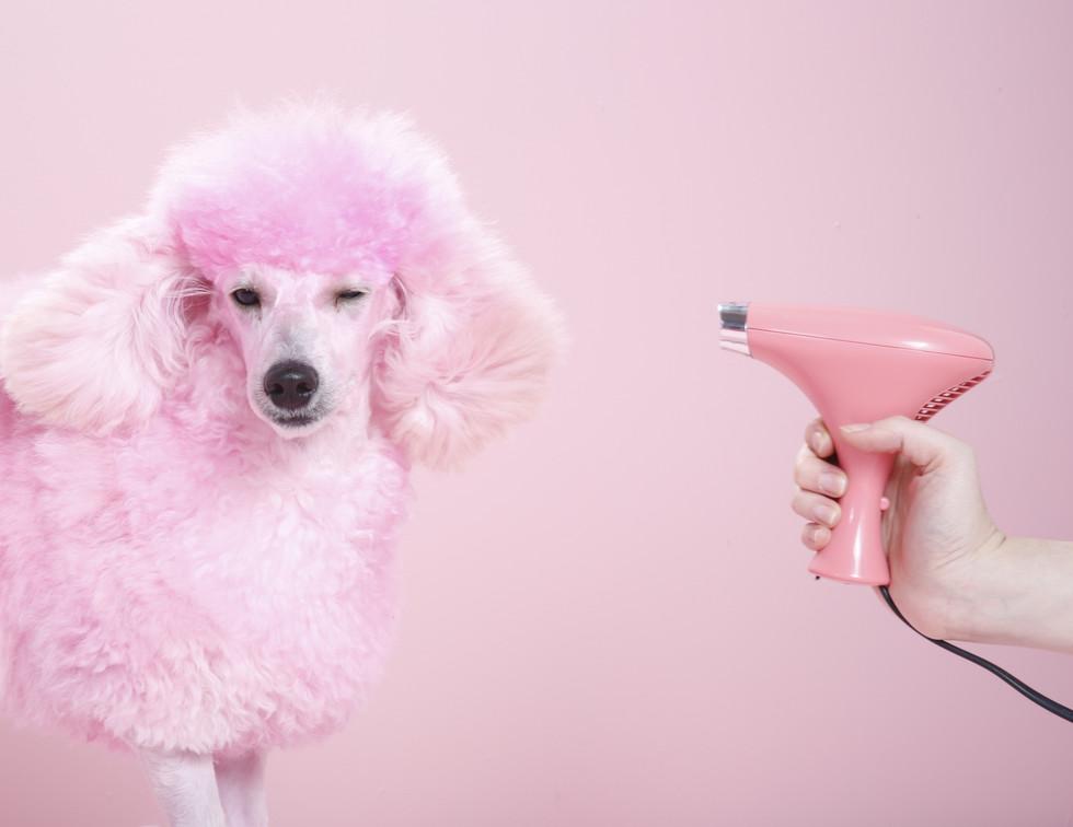 pink poodle.jpg