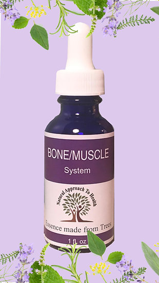 Bone/Muscle