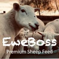 Eweboss%2520logo_edited_edited.png