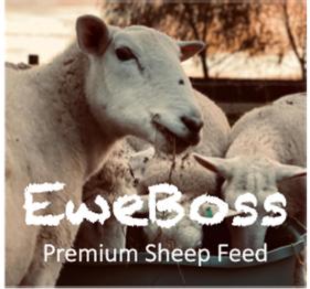 Eweboss logo.png