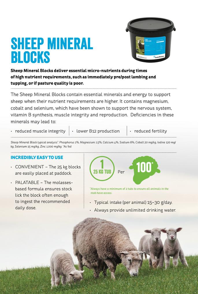 sheep block.png