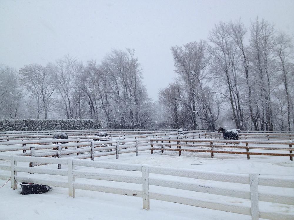 Snowy Thanksgiving
