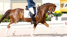 Amanda McAuliffe & Da Kiekste Win Trophy in FEI Pony Division of Florida International Dressage
