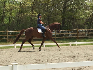 Flying Change Farm Schooling Show